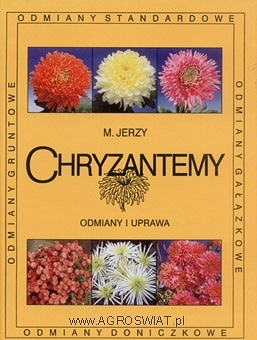 Chryzantemy